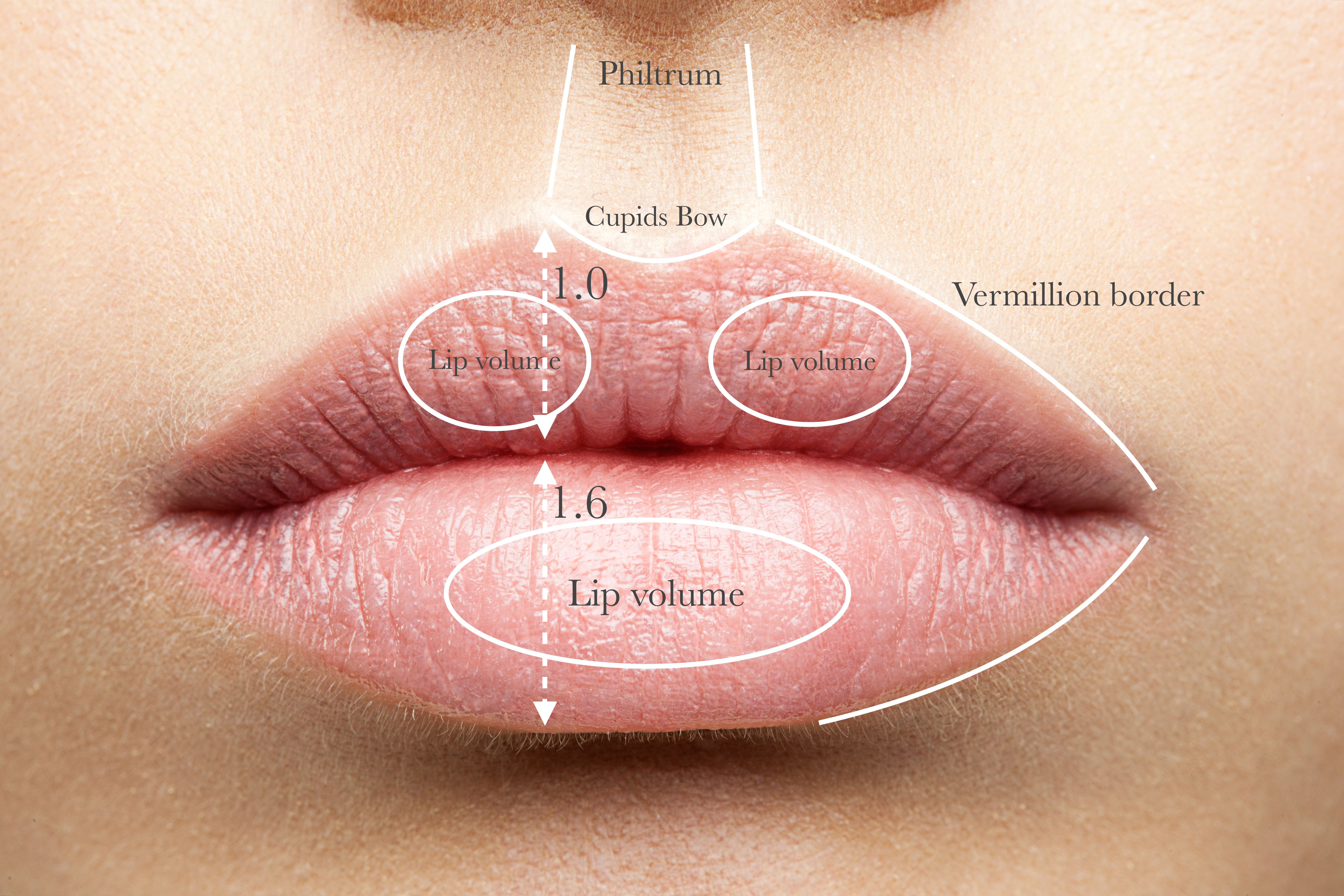 Pictures Of Human Lips Anatomy Kidskunstfo